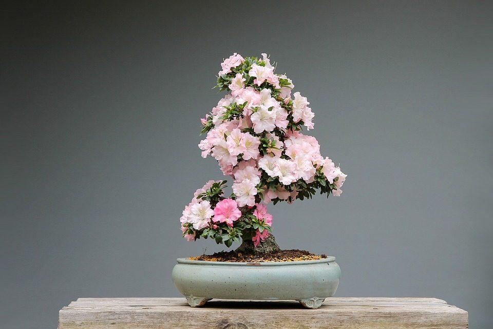 Bonsai tree care system