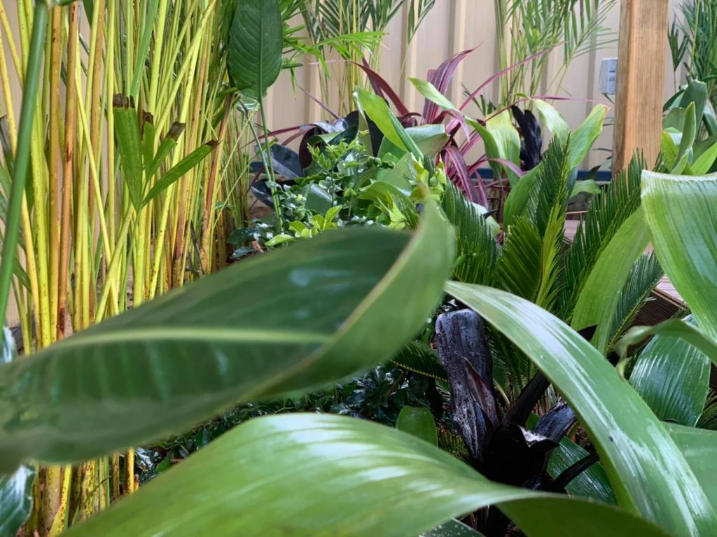 A Tropical garden in Tapping