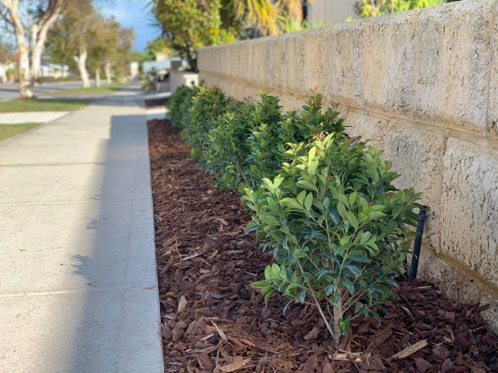 A line of hedges